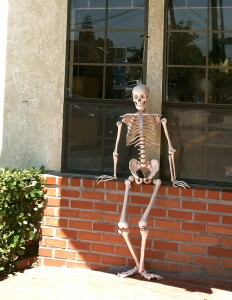 Rob Ammirati skeleton